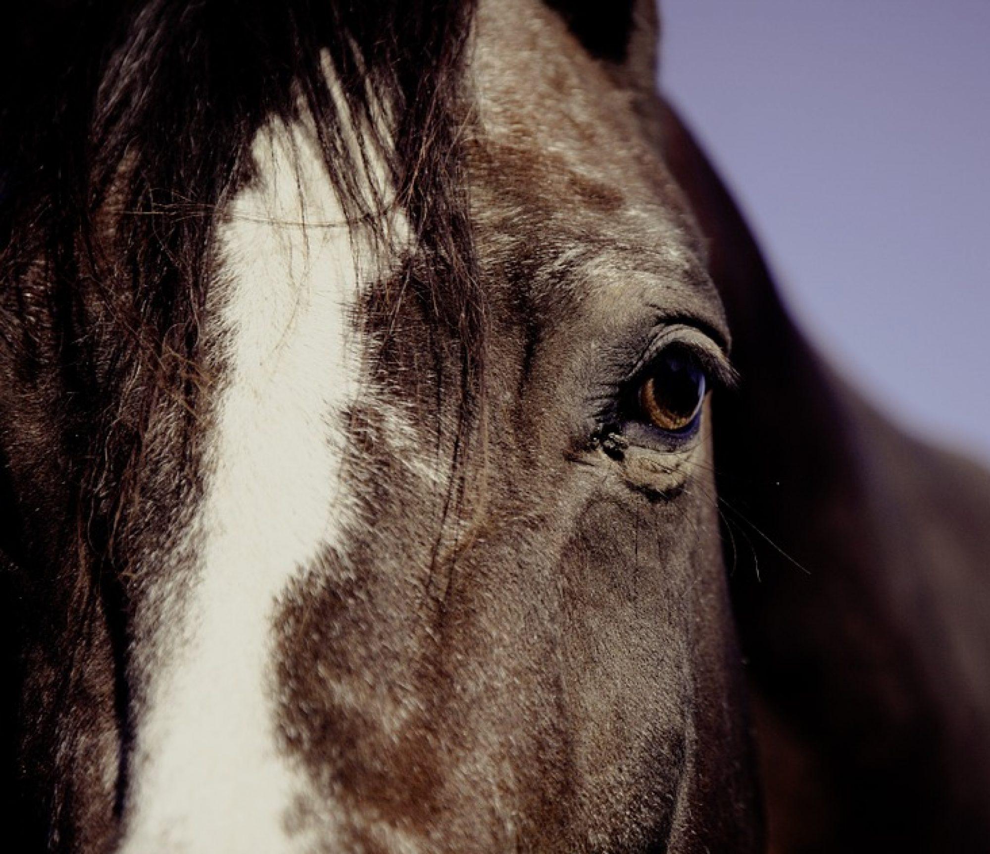 cropped-horse-594191_960_720-OJO.jpg